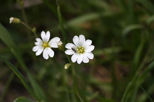 bug on a flower again